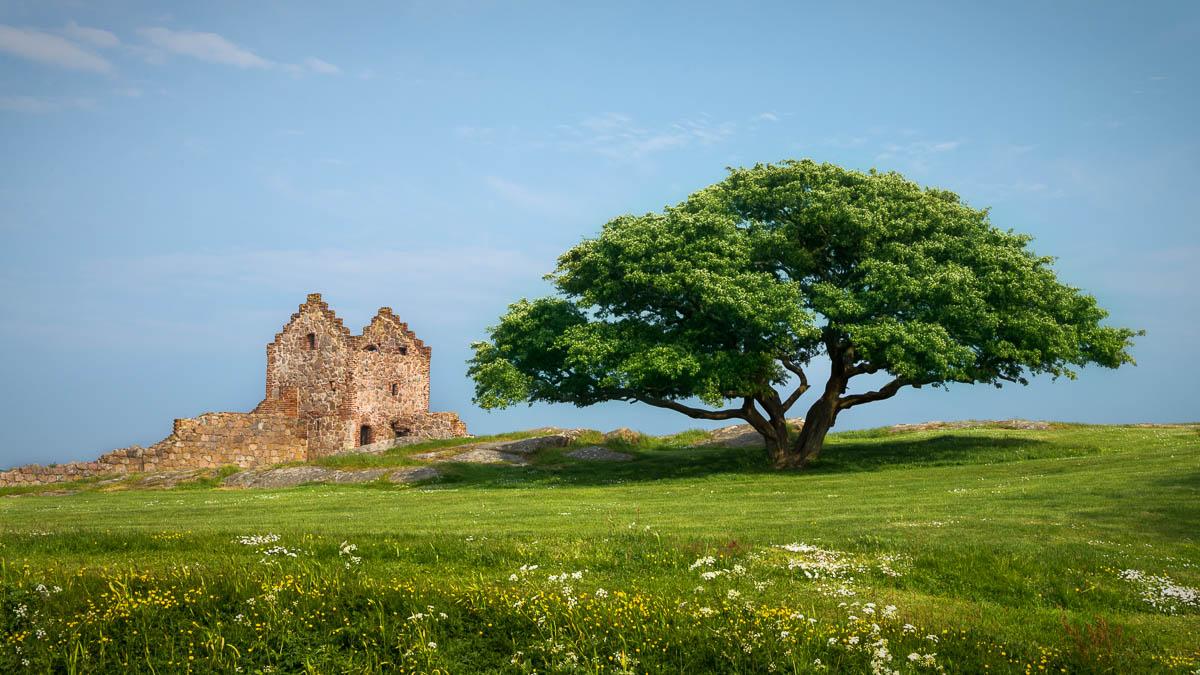Hammershus Castle in Summertime. By Karen Vesterager.